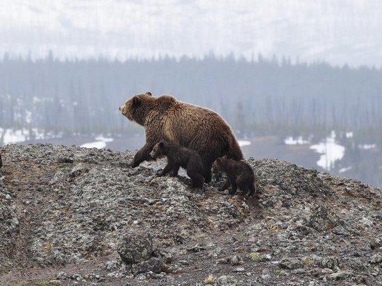 Под Иркутском медведь пролез в окно, съел мужчину и скрылся