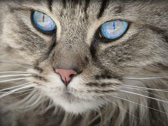 """Умение понять кошку по """"выражению морды"""" оказалось редким талантом"""