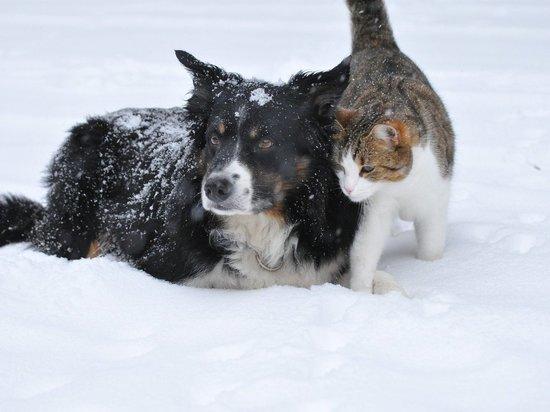 Ямальские ветеринары: какие растения наиболее токсичны для кошек и собак. Фото