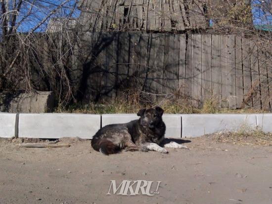 Отлов бродячих собак в Забайкалье будут снимать на видео