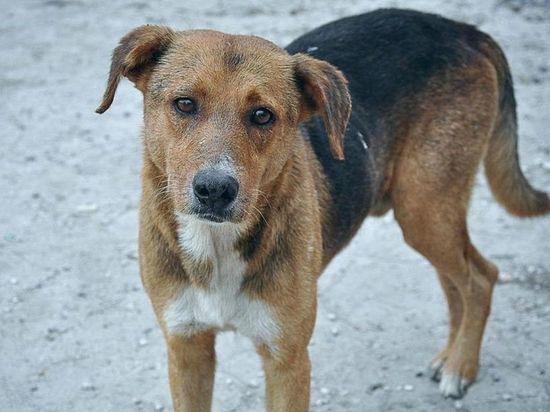 Одна бродячая собака обойдется бюджету Забайкалья в 7 тыс рублей