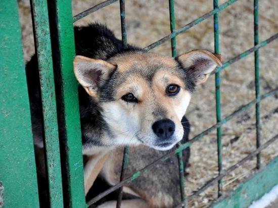Отлов и содержание собак в Забайкалье поручат спецкомпаниям