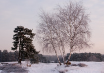 Тело девушки на дереве обнаружено в Краснокаменске