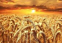 Шипуновские аграрии внесли достойный вклад в каравай Алтайского края