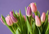 Цветочный магазин в Пскове остался без тюльпанов из-за нарушений во время перевозки