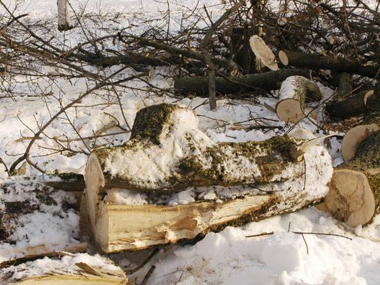 Раздавленная березой москвичка занималась спиливанием деревьев