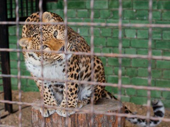 Перед Новым годом в ивановском зоопарке можно побывать всего за сто рублей