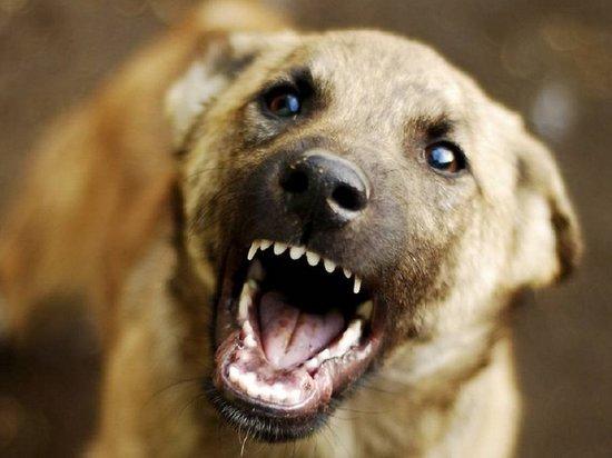 В Иванове собака напала на ребенка в детском саду