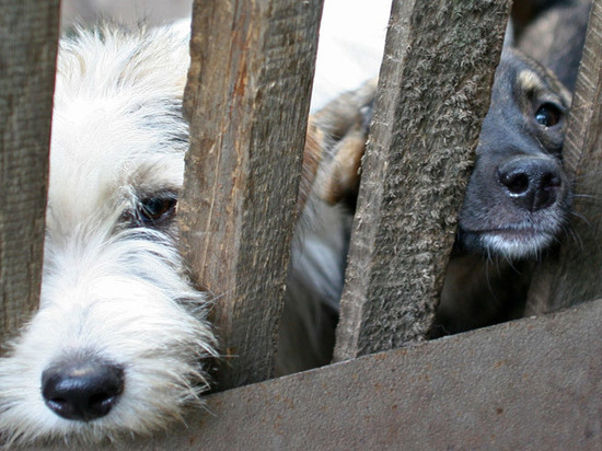 Депутаты предложили создать кодекс волонтера приютов для животных