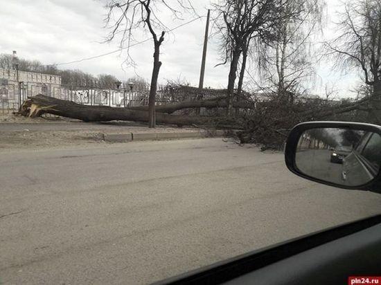 Штормовой ветер в Пскове затихнет только в субботу