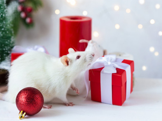 Какие знаки Зодиака обласкает грядущий год Крысы