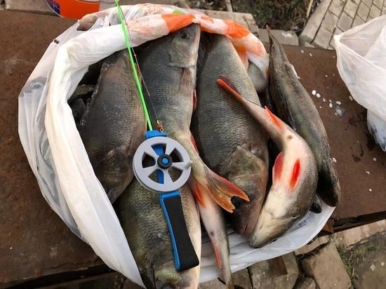 Первый лед не обманет: рыбаки хвастают уловами