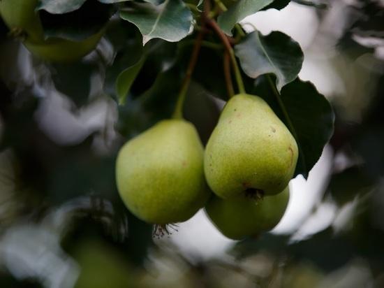 7 незаменимых фруктов для людей, страдающих от онкологии