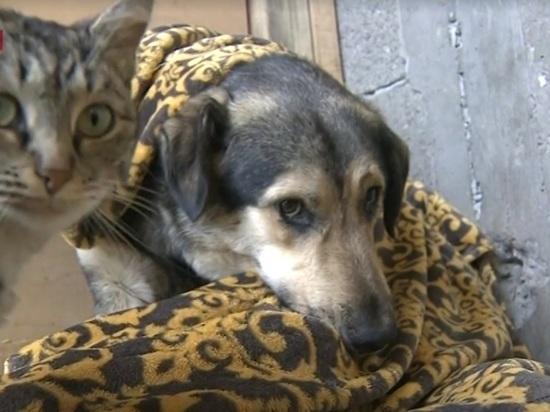 Живодерню под видом приюта для собак обнаружили в Дагестане