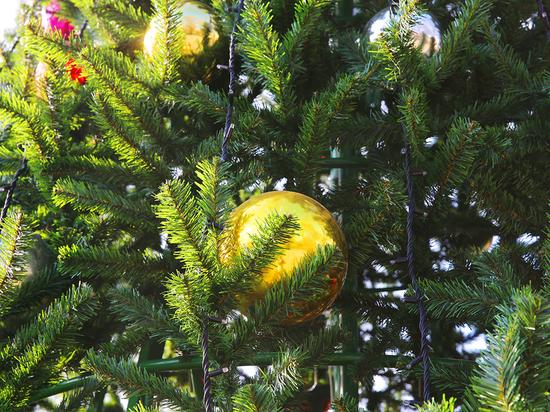 Одна из самых высоких елок в СКФО будет в Дербенте