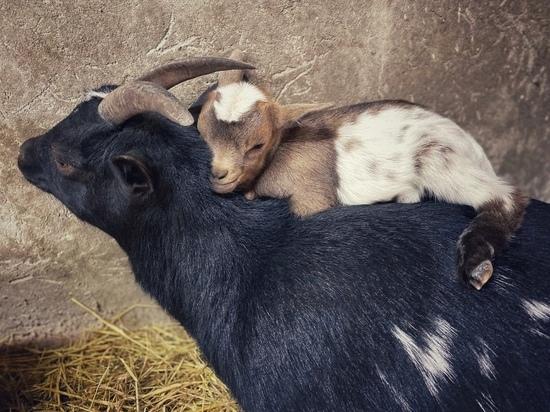 Малыши размером с ладошку появились в зоопарке Калуги