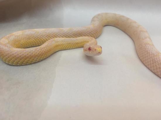 В Туле в обувной магазин заползла змея