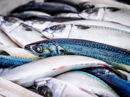 Следствие проверит факты о просроченной рыбе в психбольнице в Ставрополе