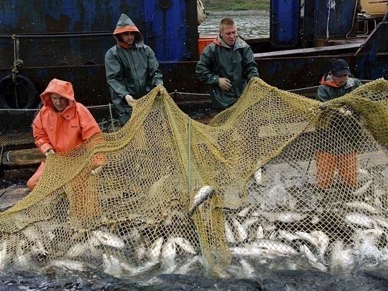 Сахалин в уходящем году оказался на втором месте по добыче лосося