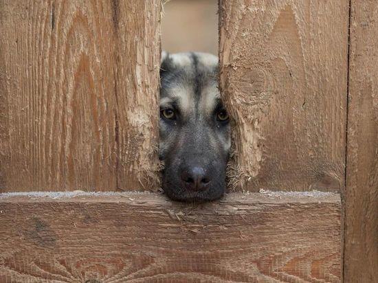 Псковскому приюту «Лесопилка» срочно требуются  будки для собак