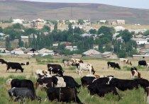 В Казахстане насчитывается десятки тысяч дипломированных аграриев, но села все равно пустуют