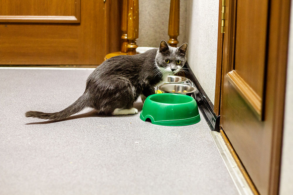 Музейные кошки в Хабаровске: как живет первая музейная хвостатая чета