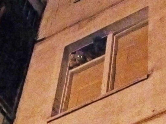 В Одинцове соседи замуровали квартиру, в которой живут одни кошки