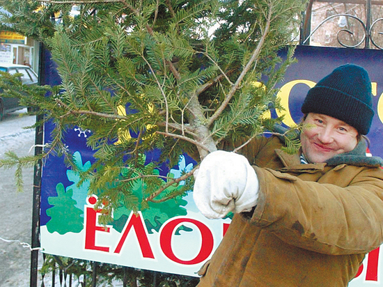 Названы цены на новогодние елки
