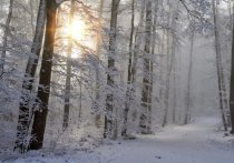 Сегодня: что будет происходить в Карелии в четверг, 12 декабря