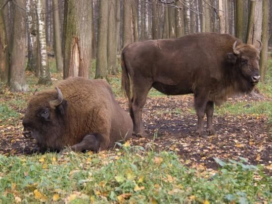 В Приокско-Террасном заповеднике в 2020 году пройдет экологическая Спартакиада