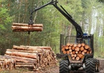 Костромские лесорубы перечислили в бюджет более миллиарда рублей