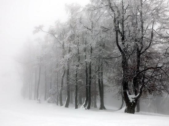 В Новосибирске портится погода: 13 декабря обещают мокрый снег