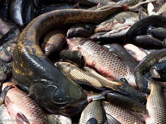 В Калмыкии выловили больше рыбы, чем в прошлом году