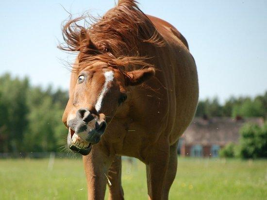 Полицейские арестовали истязавшего соседей лошадиным ржанием нижегородца