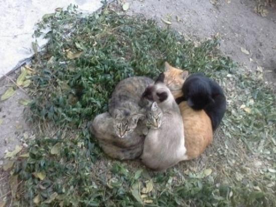 Неизвестные живодеры массово травят кошек в Тверской области