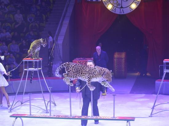 Более 1,5 тысячи детей побывали на елке в рязанском цирке
