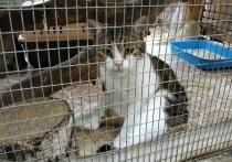 В Новомосковске оглашен приговор дрессировщикам кота-наркокурьера