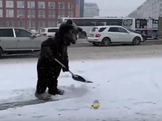 По улицам Новосибирска ходит медведь и чистит их от снега