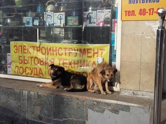 Мэрия Саратова: бродячие собаки голодать не будут