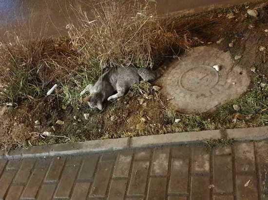 После смерти мужа москвичка выбросила из окна его кошек