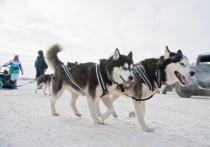 Советы для волгоградцев, как выгуливать собак в холодную погоду