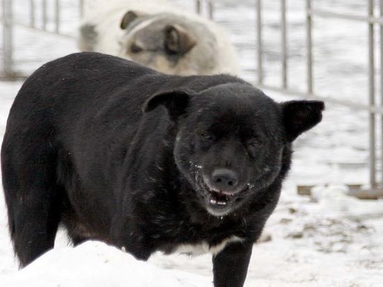 В Гусиноозерске жители отбили у собак тело новорожденного