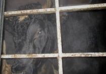 Лосиное мясо и трех коров хотели незаконно ввезти в Псковскую область
