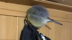 «Как ершик»: синица уснула в балке тундровиков в ЯНАО