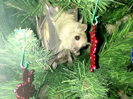 Москвичка нарядила елку живыми летучими мышами