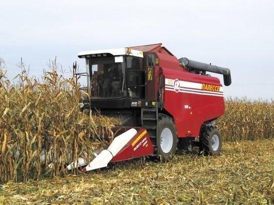 В Тамбовской области нашли похитителя 10 тонн кукурузы