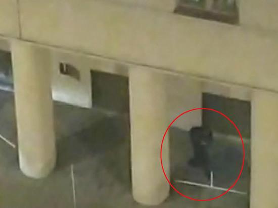 Генерал ФСБ назвал возможную причину теракта на Лубянке