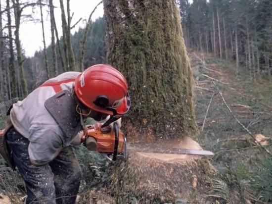 В Ивановской области «черные» лесорубы получили реальные сроки