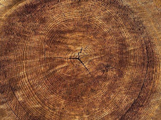 """Склад """"сомнительной"""" древесины нашли в Ясногорском районе"""