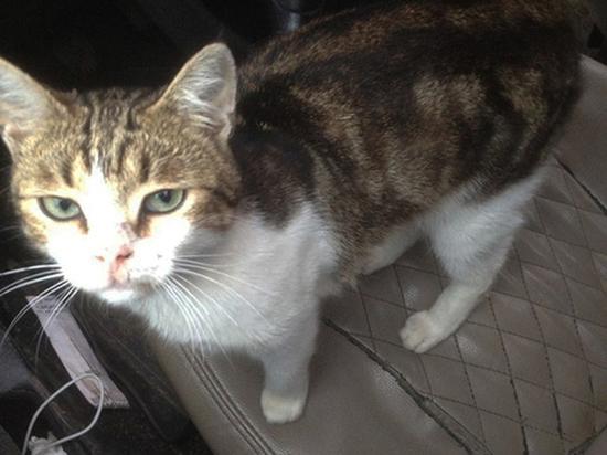 Тульский кот-наркокурьер остается звездой в СМИ